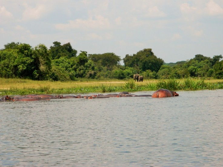 Murchison Falls Nationalpark